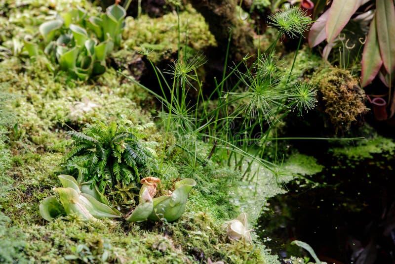 De installaties eten insecten die door dieren te eten om de bomen door middel van het bedriegen van insecten te voeden in het ops royalty-vrije stock afbeeldingen