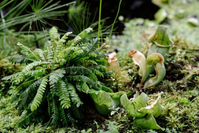 De installaties eten insecten die door dieren te eten om de bomen door middel van het bedriegen van insecten te voeden in het ops royalty-vrije stock foto