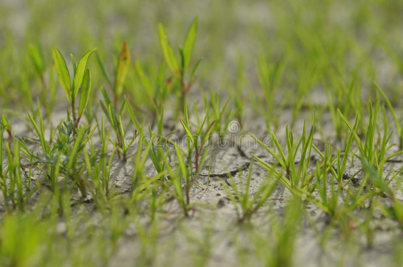 De installaties groeien op de droge grond De installaties proberen te leven het volgende leven stock afbeelding