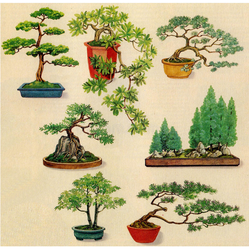 De installaties van de bonsai voor kleur vector illustratie