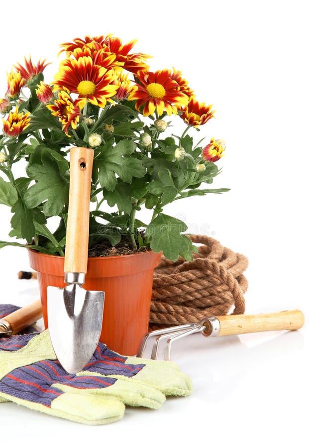 De installaties van de tuin met bloemenrozen en apparatuur royalty-vrije stock afbeeldingen