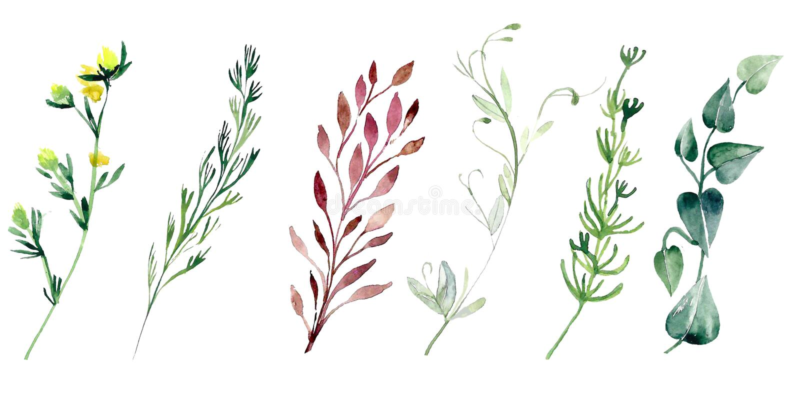 De installaties van het Watercolourgebied Geplaatste bloemen stock illustratie