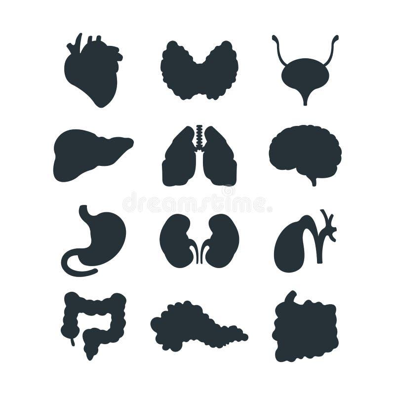 De interne organen silhouetteren vectorillustratie vector illustratie