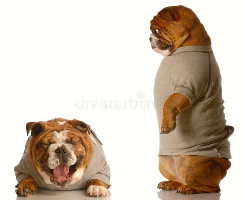 De intimidatie van de hond royalty-vrije stock afbeeldingen
