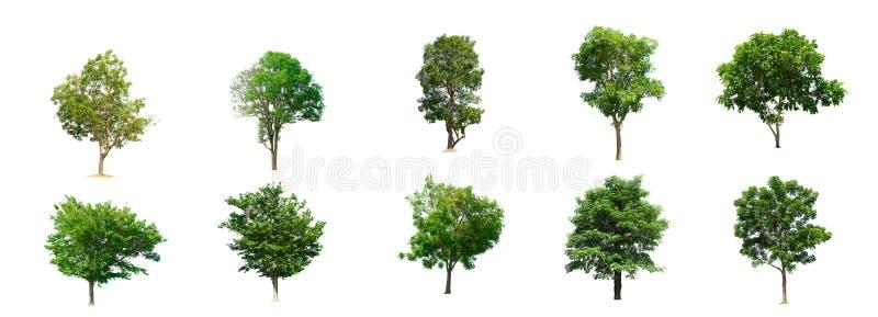 De inzameling van bomen geïsoleerde bomen royalty-vrije illustratie