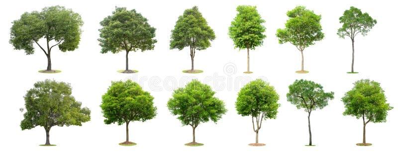 De inzameling van bomen op witte achtergrond wordt ge?soleerd die De mooie en robuuste bomen groeien in het bos, de tuin of het p stock fotografie