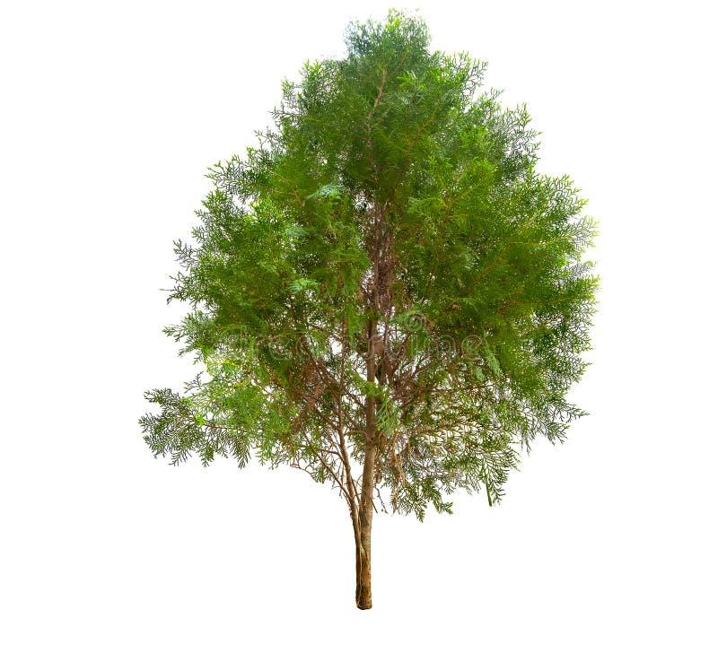 De inzameling van Bomenreeks heeft groen blad op Geïsoleerde witte achtergrond stock afbeelding