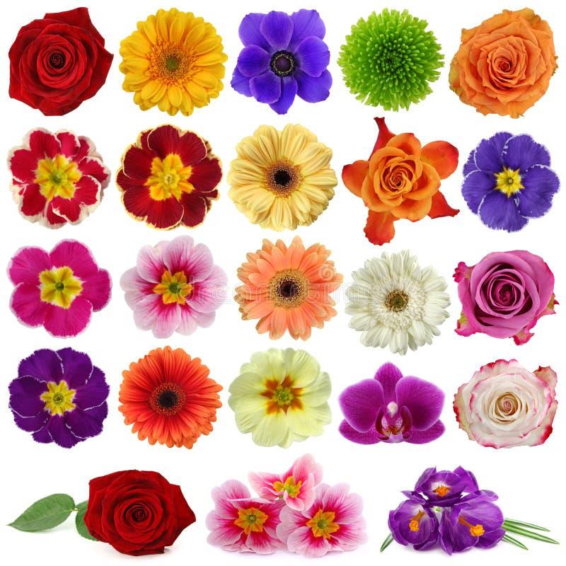 De inzameling van de bloem stock afbeeldingen