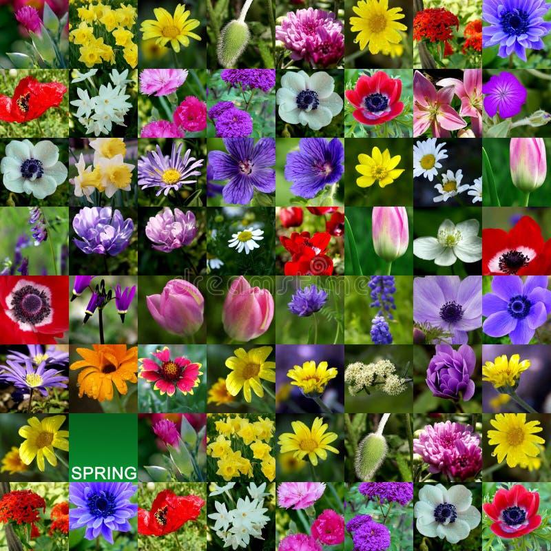 De Inzameling van de Bloem van de lente stock afbeelding
