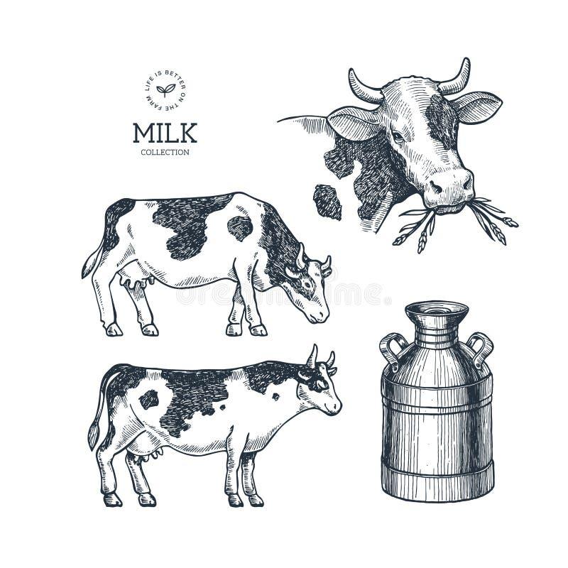 De inzameling van het melklandbouwbedrijf Koe gegraveerde illustratie Uitstekende landbouw en veeteelt Vector illustratie vector illustratie