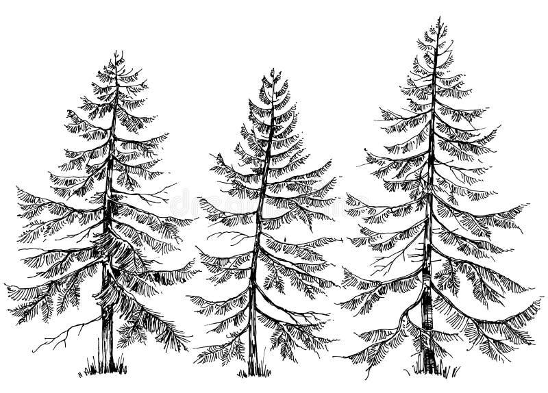 De inzameling van pijnboombomen vector illustratie