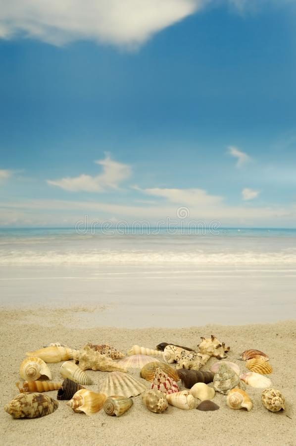 Shell-inzameling op strand stock fotografie