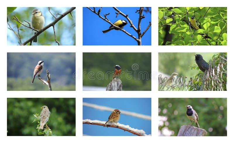 De inzameling van vogels stock foto's