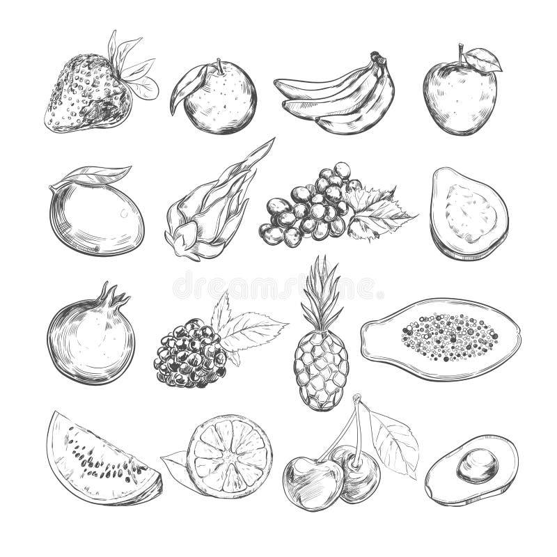 De inzameling van vruchten Vector getrokken hand Geïsoleerde voorwerpen royalty-vrije illustratie