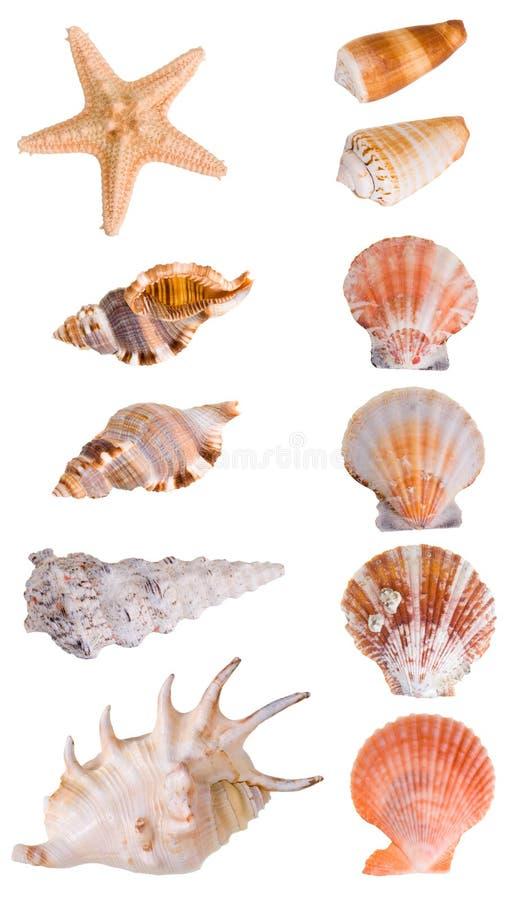 De inzameling van zeeschelpen royalty-vrije stock afbeelding