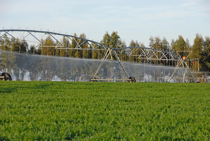 De irrigatie van de sproeier voor het water geven van gecultiveerd gebied stock fotografie
