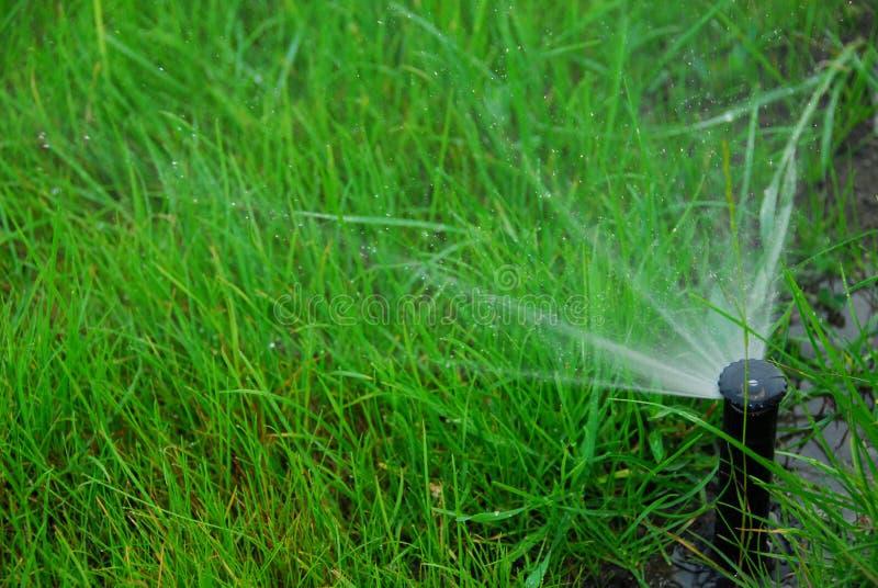 De irrigatie van het gazon stock fotografie