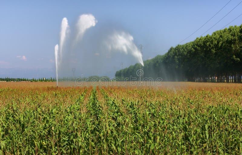 De irrigatie van het graangebied royalty-vrije stock foto