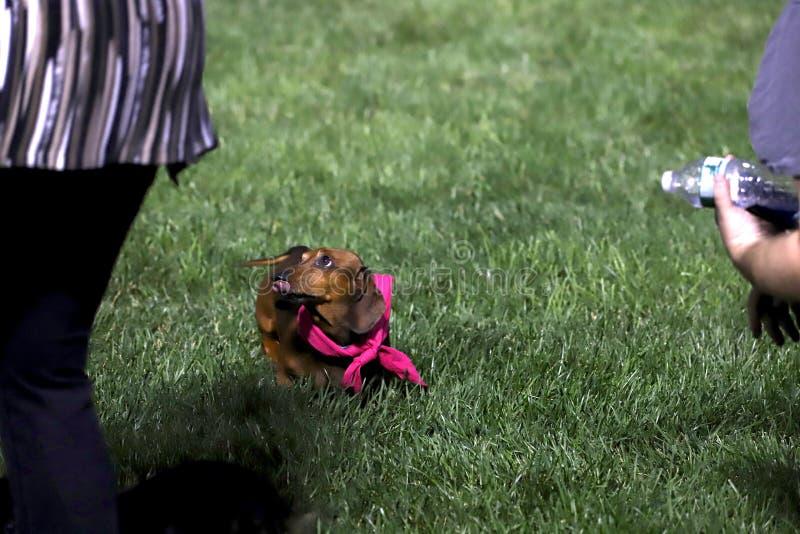 2de Jaarlijkse Worstjehond Derby Family Fun royalty-vrije stock afbeeldingen