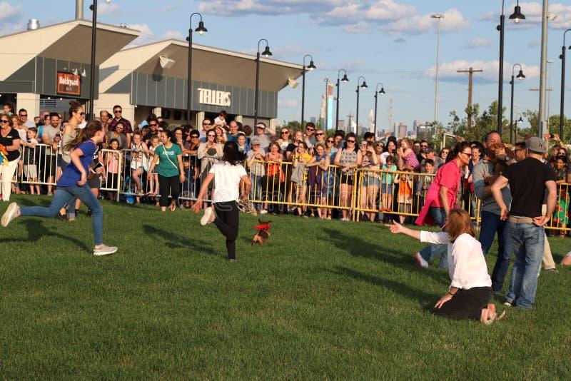 2de Jaarlijkse Worstjehond Derby In Motion Escape Dog stock afbeelding