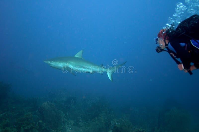 De jacht van de haai stock afbeeldingen