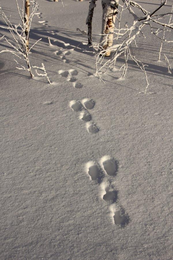 De jacht van de winter stock afbeelding