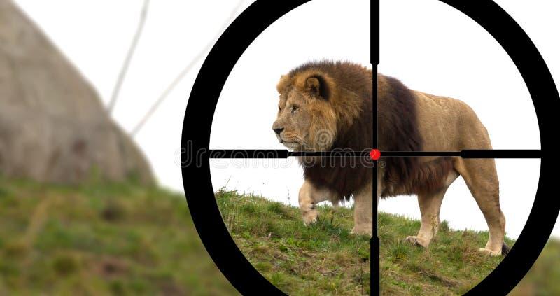 De jacht van een mannelijke leeuw stock afbeelding