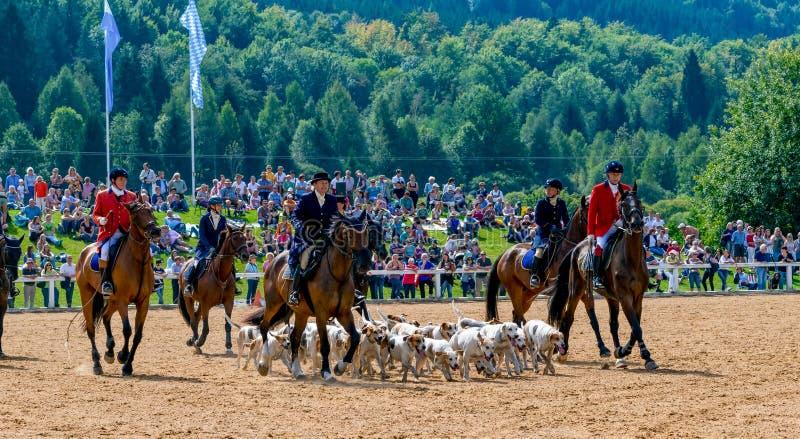 De jagende ruiter met vele honden bij een nagel toont stock afbeeldingen