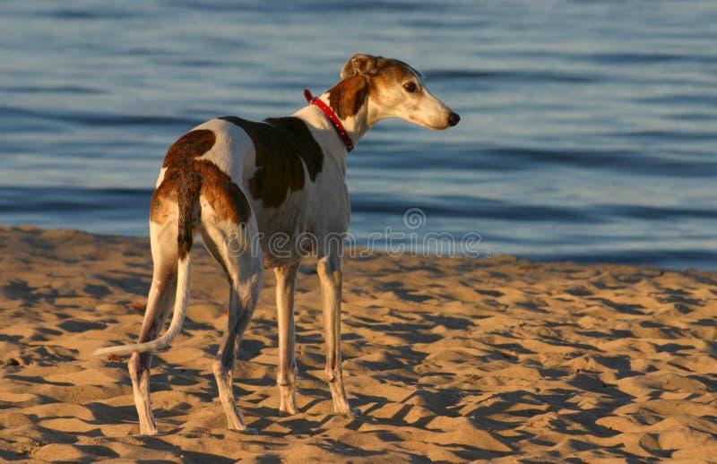 De jager van het strand royalty-vrije stock afbeeldingen