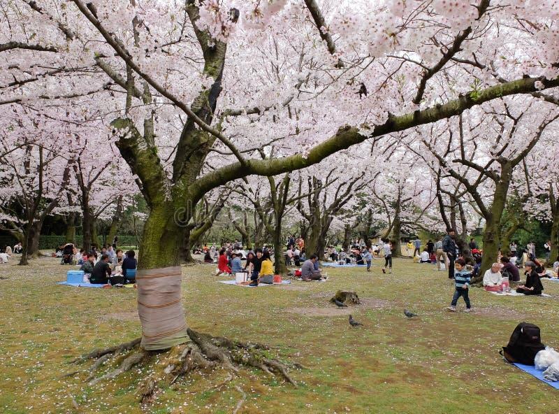 De Japanse het genieten van Kers komt festival in park tot bloei stock afbeeldingen