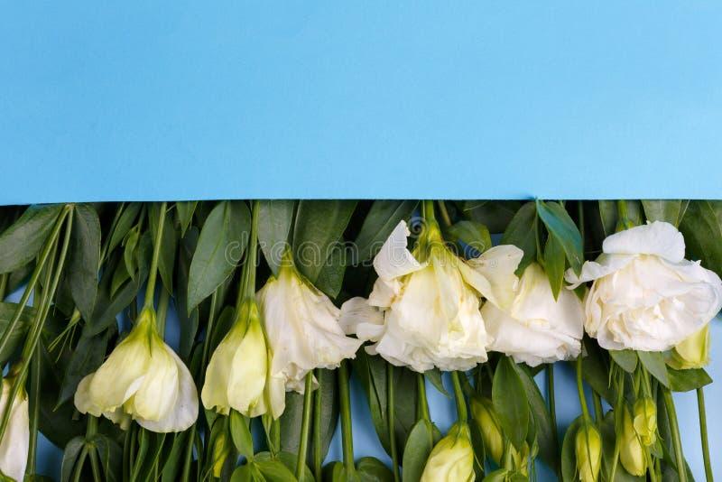 De Japanse rozen liggen op een rij in een blauwe envelopbovenkant - neer op een blauwe houten achtergrond stock foto's