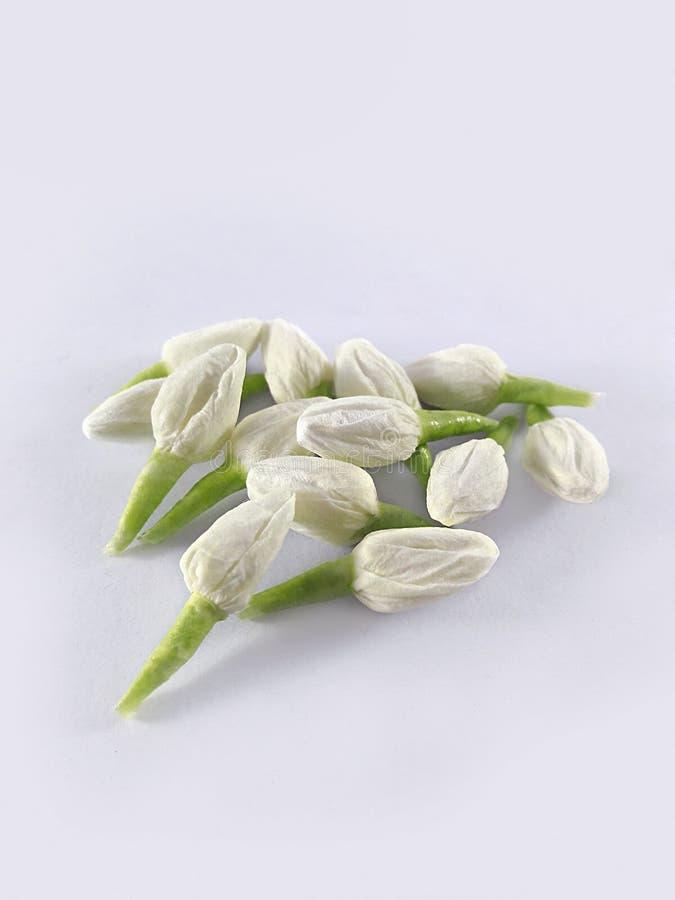 De jasmijn wordt gemaakt van weefsels royalty-vrije stock afbeelding