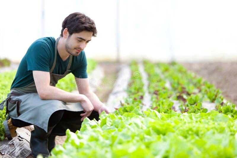 De jonge aantrekkelijke landbouwer verifieert vooruitgang van cultuur royalty-vrije stock afbeeldingen