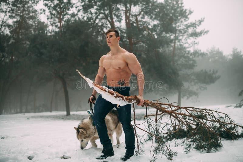 De jonge bodybuilder met naakt torso leidt hond Malamute en draagt pijnboomtak in zijn hand bij gang in de winterbos royalty-vrije stock fotografie