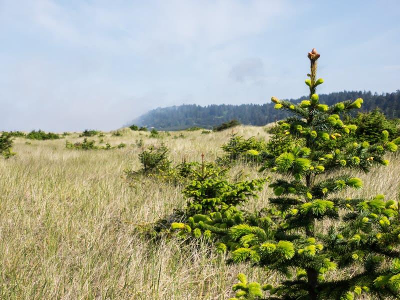 De jonge bomen groeien in een weide stock afbeeldingen