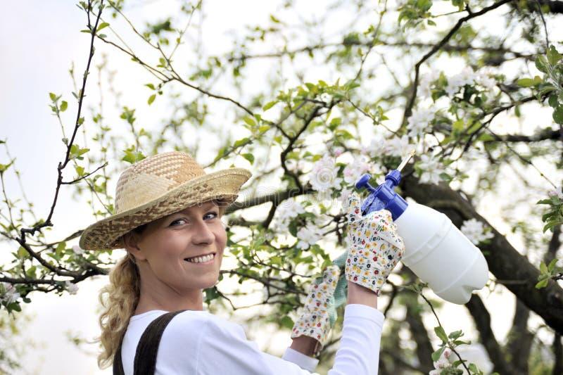 De jonge boom van de vrouwen bespuitende appel royalty-vrije stock afbeeldingen