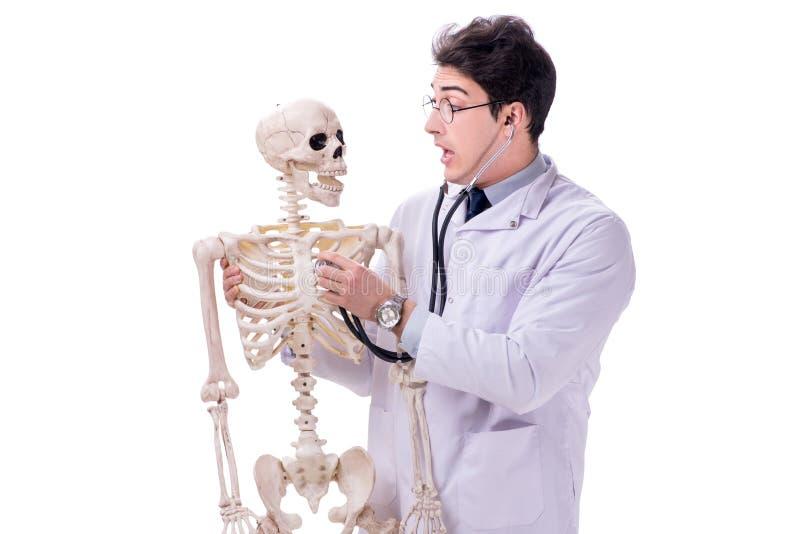 De jonge die arts met skelet op wit wordt geïsoleerd stock afbeeldingen