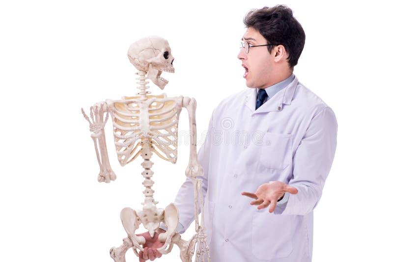 De jonge die arts met skelet op wit wordt geïsoleerd stock fotografie