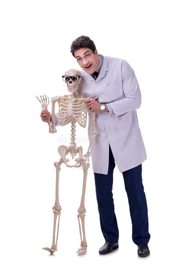De jonge die arts met skelet op wit wordt geïsoleerd stock afbeelding