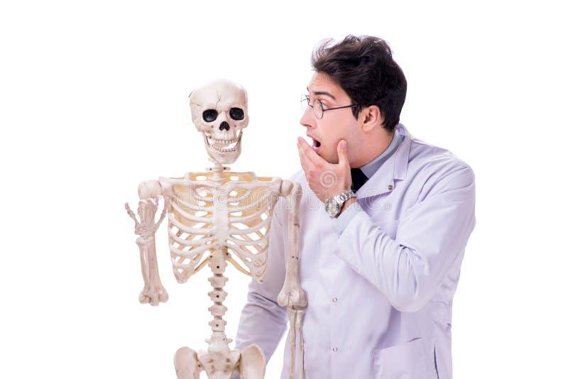 De jonge die arts met skelet op wit wordt geïsoleerd royalty-vrije stock fotografie