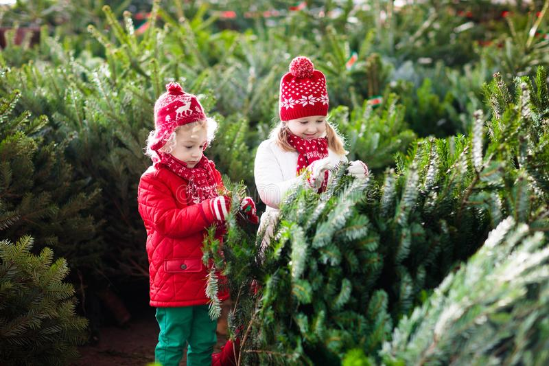 De jonge geitjes selecteren Kerstboom Familie het kopen Kerstmisboom stock fotografie