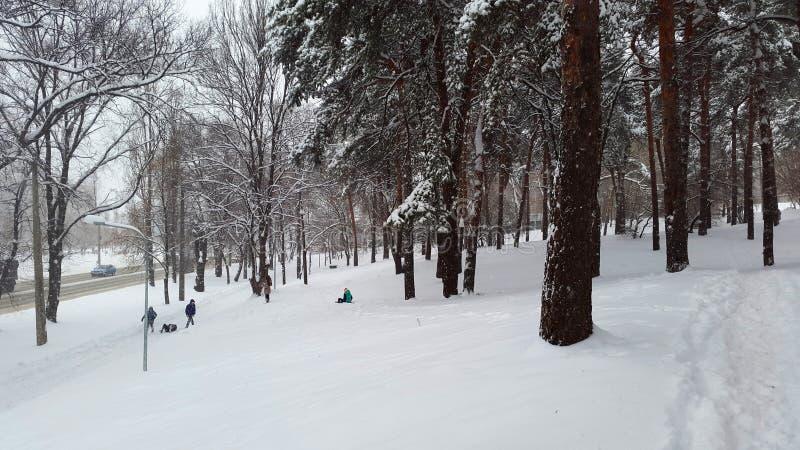 De jonge geitjes sledding in een park - de winter stock foto's