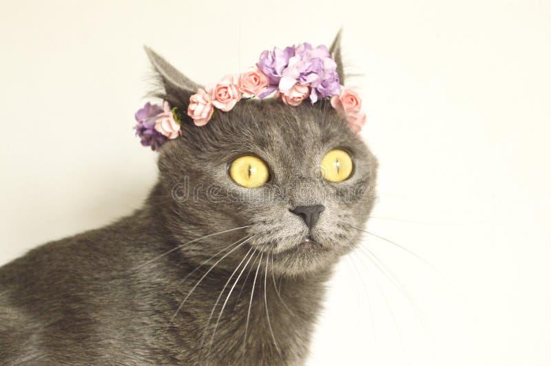 De jonge grijze pot van het de lenteportret in een bloemenkroon royalty-vrije stock foto