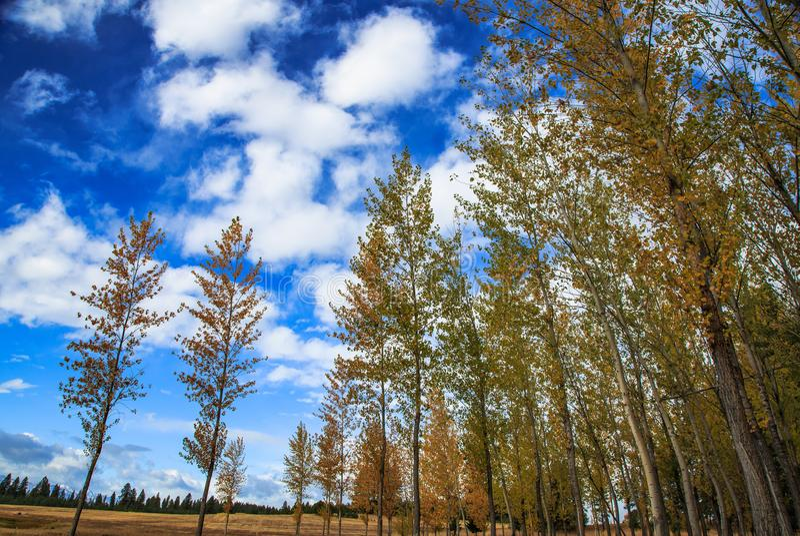 De jonge groep die van Espbomen vanuit lage invalshoek omhoog aan bewolkte hemel kijken stock foto's