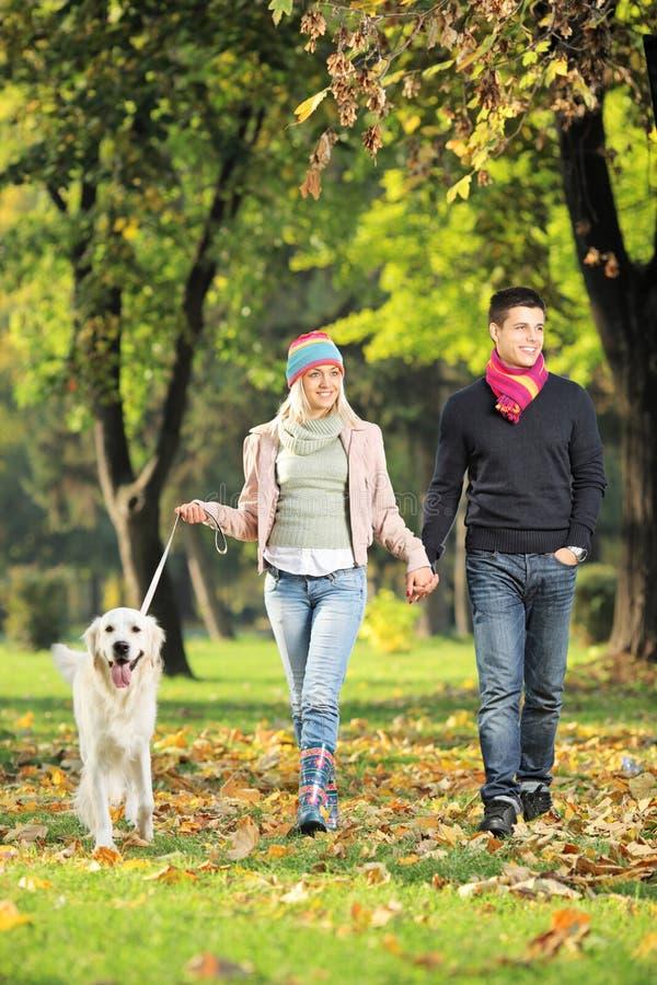 De jonge handen van de paarholding en het lopen van een hond royalty-vrije stock foto