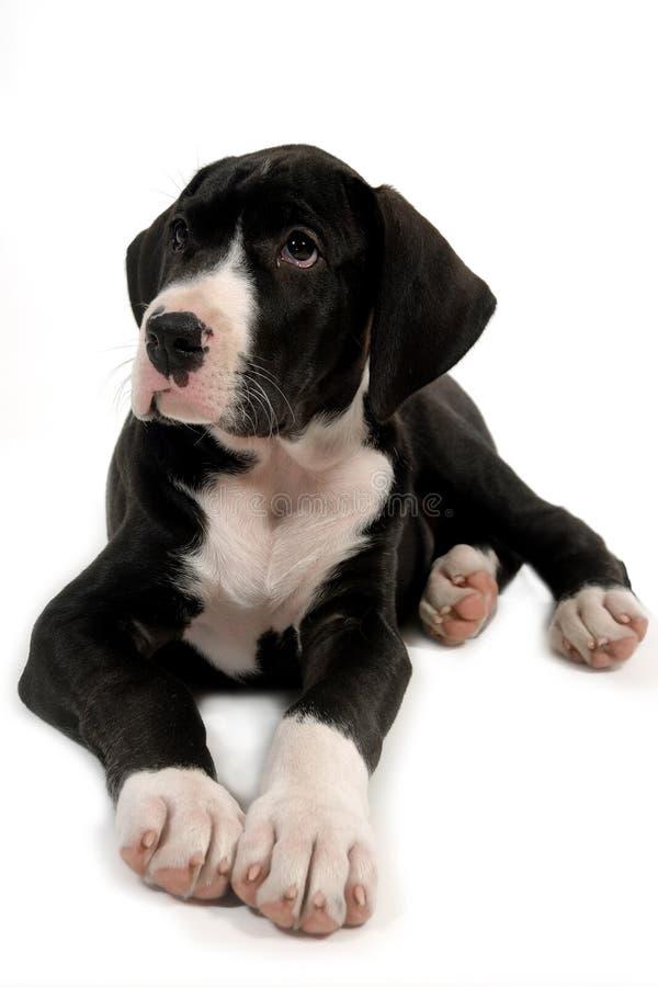 De jonge hond rust royalty-vrije stock foto