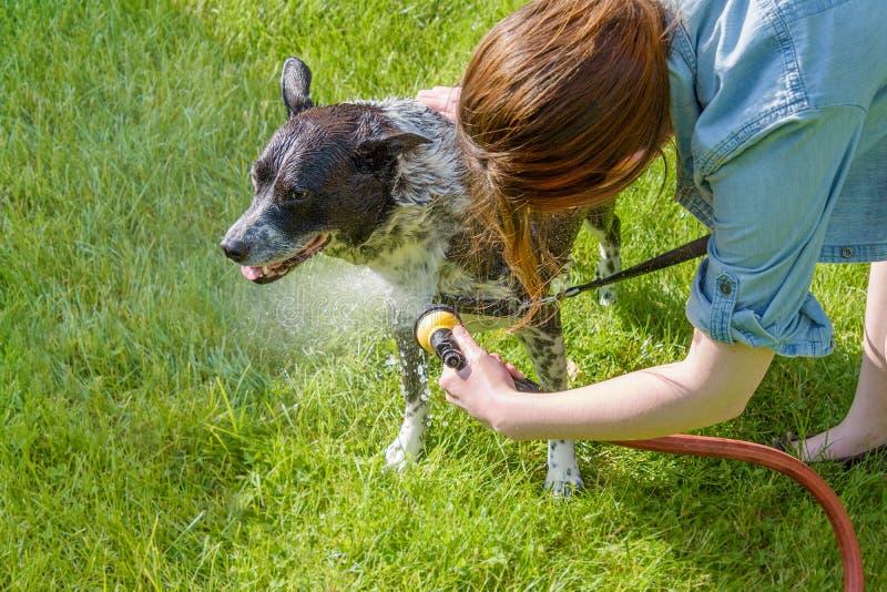 De jonge hond van het vrouwen schoonmakende huisdier buiten royalty-vrije stock afbeeldingen