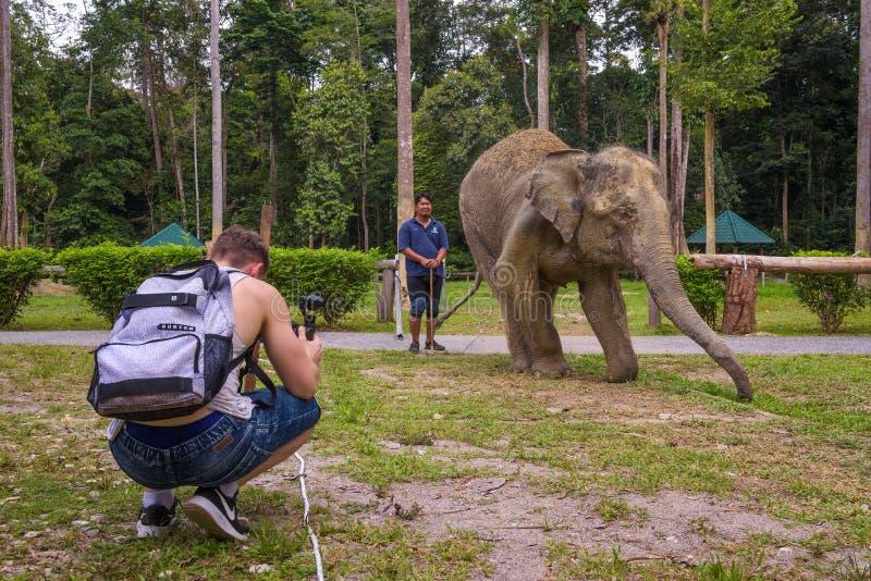De jonge jongen filmt een Indische olifant stock afbeeldingen