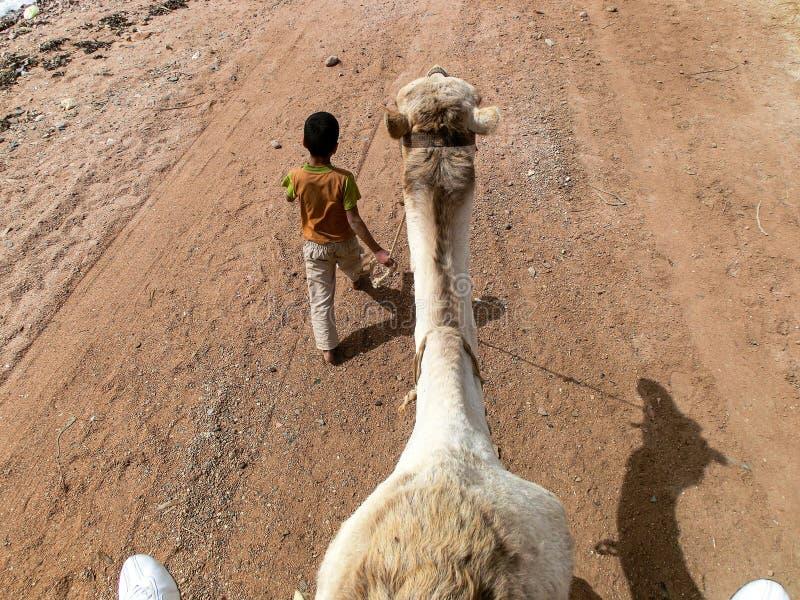 De jonge jongen moet op zijn 7 jaar in de toeristenindustrie werken Hij maakt een gat in de teugel van de kameel, Sharm el Sheikh stock afbeeldingen