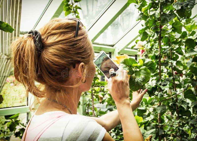 De jonge Kaukasische vrouw neemt foto met binnen smartphone van hibiscus royalty-vrije stock foto